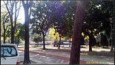 20140222_高雄河堤公園黃花風鈴木:20140222_00.jpg