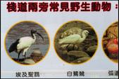 20150509_高美濕地:20150509_56.jpg