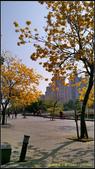 20140222_高雄河堤公園黃花風鈴木:20140222_05.jpg