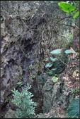 20130215_南壽山 之 百獸岩、山豬洞、美谷溝 等:20130215_13.jpg