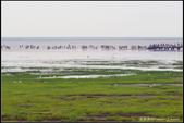 20150509_高美濕地:20150509_53.jpg