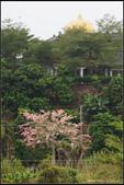 20121027_楠西永興吊橋、玄空法寺:20121027_18.jpg
