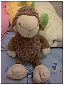 JOJO❤隨性拍:最柔軟的毛QQ~羊寶寶