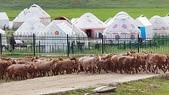 北疆  North Xinjiang - 20180701:07040517喀納斯賈登峪.jpg