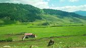 北疆  North Xinjiang - 20180701:07050308喀納斯環山公路.jpg