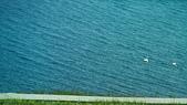 北疆  North Xinjiang - 20180701:07080123賽里木湖的天鵝家族.JPG