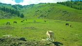 北疆  North Xinjiang - 20180701:07050318喀納斯環山公路.jpg