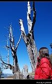 2009-1/10~1/11 南投賞梅之旅:DSC_4580.jpg