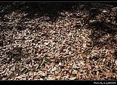 2009-1/10~1/11 南投賞梅之旅:DSC_4548.jpg