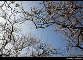 2009-1/10~1/11 南投賞梅之旅:DSC_4375.jpg