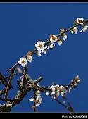 2009-1/10~1/11 南投賞梅之旅:DSC_4378.jpg