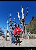 2009-1/10~1/11 南投賞梅之旅:DSC_4596.jpg