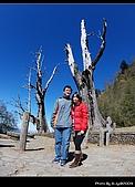2009-1/10~1/11 南投賞梅之旅:DSC_4597.jpg