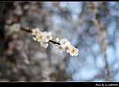 2009-1/10~1/11 南投賞梅之旅:DSC_4756.jpg