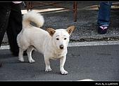 2009-1/10~1/11 南投賞梅之旅:DSC_4350.jpg