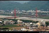 2008-11-16 銅鑼杭菊:DSC_1921.jpg