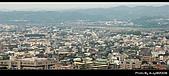 2008-11-16 銅鑼杭菊:DSC_1922.jpg