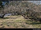2009-1/10~1/11 南投賞梅之旅:DSC_4358.jpg