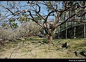 2009-1/10~1/11 南投賞梅之旅:DSC_4359.jpg