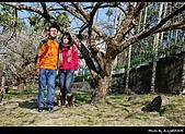 2009-1/10~1/11 南投賞梅之旅:DSC_4364.jpg