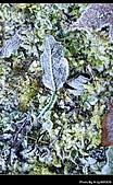 2009-1/10~1/11 南投賞梅之旅:DSC_4564.jpg