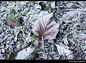 2009-1/10~1/11 南投賞梅之旅:DSC_4567.jpg