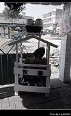 2009-1/10~1/11 南投賞梅之旅:DSC_4303.jpg