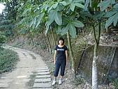 登山步道091018:DSC00661.JPG