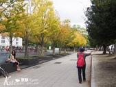 【京都】2016新年京阪走春。Day 4-3。平安神宮、山元麵藏烏龍麵:PA090799.JPG
