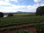8 Day Australia Tasmania 4:DSC03445.JPG