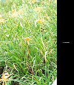 980924機車環島第三天(台東):DSC_0382.jpg
