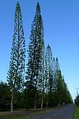 夏威夷─大島:夏威夷豆農場