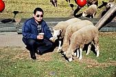 清境農場之旅:與羊為伍