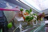 精緻商業套餐:胭脂蝦薄片襯有機生菜
