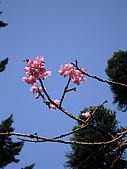 陽明山花季:陽明山花季