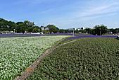 花博巡禮─圓山公園區:地景花海