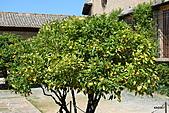 西班牙之旅─風車群、格蘭納達、哥多華、塞維亞:橘子樹