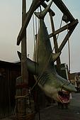 環球影城之旅:大白鯊