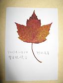 美加賞楓遊:楓葉