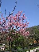 陽明山花季:IMG0034
