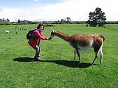 紐西蘭奧克蘭之旅:愛歌頓牧場