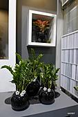 2011台灣花卉展:貴氣之星百花競艷