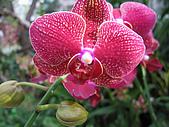 蘭花之美:蘭花之美