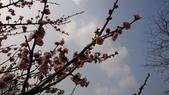 2017-02-26 南京梅花節:DSC_0358.JPG