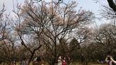 2017-02-26 南京梅花節:DSC_0352.JPG