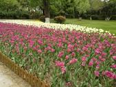 2018-04-16 南京綠博園(鬱金香花季):IMG_20180411_125625.jpg
