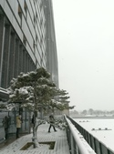 2018-01-25 到底是鵲橋還是雀巢呀?是空橋╮(▔▽▔)╭:IMG_20180125_155623.jpg