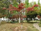 2018-04-16 南京綠博園(鬱金香花季):IMG_20180411_124648.jpg
