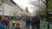 2017-03-19 雞鳴寺及南京林業大學櫻花:DSC_0042.JPG