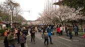 2017-03-19 雞鳴寺及南京林業大學櫻花:DSC_0060.JPG